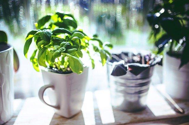 best indoor herb garden kits featured